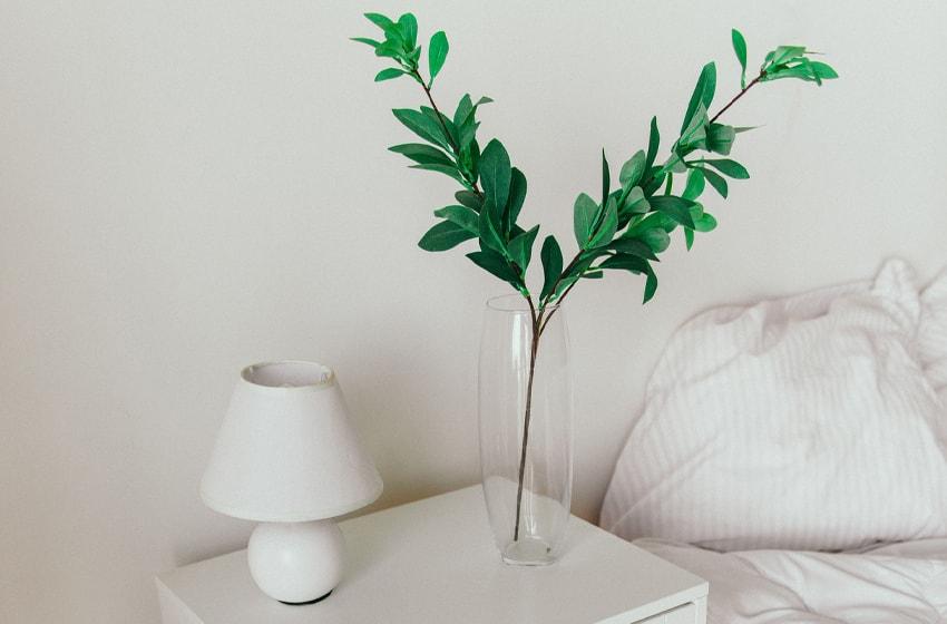 indoor house plants, peaceful sleep environment