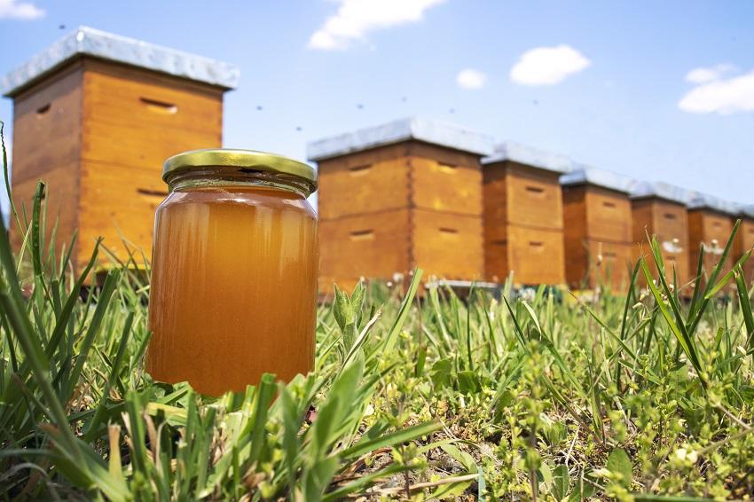 honey market trends
